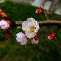 Цвет 15 апреля.. :: Олег Петрушин