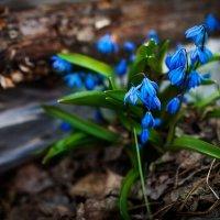 красота природы :: Наталья Никитина