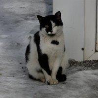 Подайте денежку для бездомных котят... :: Олег Дейнега