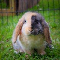 Harlequin baby boy bunny :: Natalya секрет