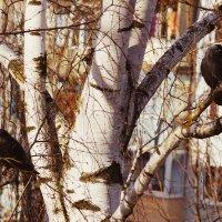 Birds :: Денис Сафронов