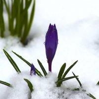 весна 19 апреля :: Краснов  Ю Ф