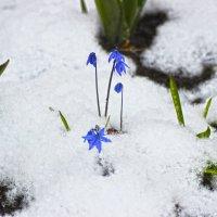 весна :: Краснов  Ю Ф