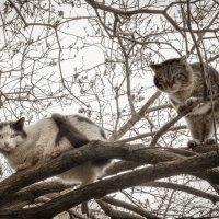 суровые котики :: Антон Летов