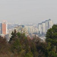 Тбилиси в тумане :: Наталья (D.Nat@lia)