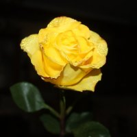 Жёлтая :: Таня Фиалка