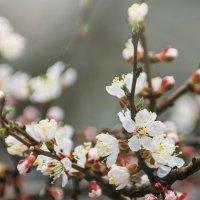 Весна за окном :: Ivan teamen