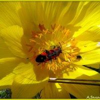 И стол и дом в цветке адониса :: Андрей Заломленков