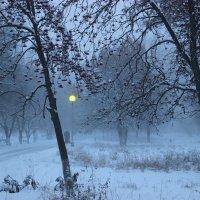 Туман. :: Ирина Королева
