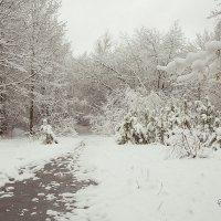Весна в Нижнем Новгороде. :: Татьяна Бондарь