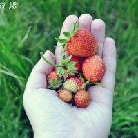 Первый урожай :: JS PhotoCompany
