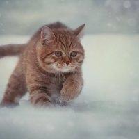 Хищник :: Олег Ярунин