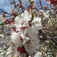 Весна... :: Сергей Петров