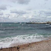 Моря синего хозяйка, Над волною реет чайка. :: Дядюшка Джо