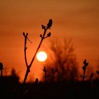 ПАСХА, Святое Воскресенье..  Утро Благостного дня. :: Виктор Бусель