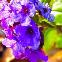 весеннее пробуждение :: Виолетта Чуднецова