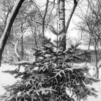 Зима :: Инна Буяновская