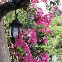 Киш в цвету :: Надежда Пи