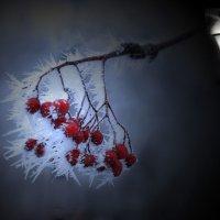 Зимняя ночь :: Борис Гуревич