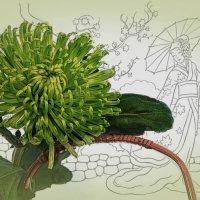 Зеленая хризантема :: Алина