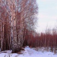 На закате апрельском весна от вечернего солнца красна :: Татьяна Ломтева