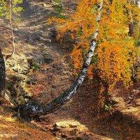 Осенний лес покоем дышит... :: Галина Стрельченя