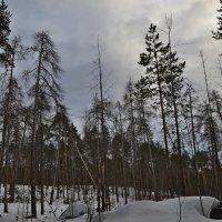 заколдованный лес :: Валентина
