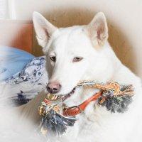 Моя собака :: Валентина Ломакина