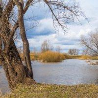 Верба у озера :: Любовь Потеряхина