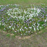 Сердечная клумба Белой башни... :: Tatiana Markova