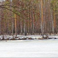 Начало весны на пруду :: Лидия (naum.lidiya)
