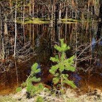 Лесных речушек многоводье... :: Лесо-Вед (Баранов)