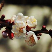 Весна пришла :: Виктор Олейников