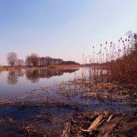 Красота природы :: Виктор Олейников