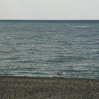 Сочи. Первый отдыхающий. :: Андрей Ванин