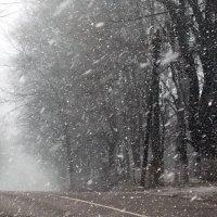 Снегопад :: Дмитрий Федулов