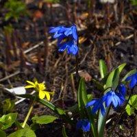 весна пришла... :: карина полякова
