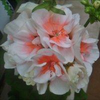 Сей цветок послали боги, чтоб беречь огонь любовный... :: Нина Корешкова