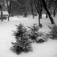Парк зимой :: Инна Буяновская