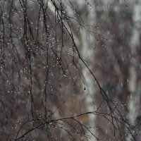 Непогода :: Валентин Котляров