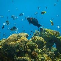 Коралловый рай :: Леонид Лившиц
