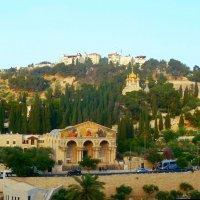 Вид на Гефсиманские сады. :: Чария Зоя