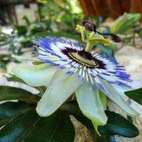 Цветок :: Irina Shtukmaster