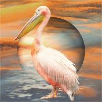 ***Их жизни пеликанов*** :: Юлия Z