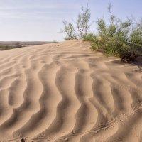 Весна в пустыни #1 :: Григорий Карамянц