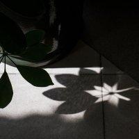 Тень и свет :: Людмила Синицына