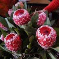 Цветы на рынке Мадейры :: Natalia Harries