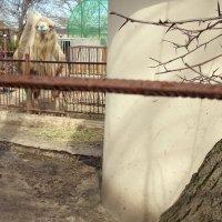 Через дырочку в заборе...))) :: Ирина Прохорченко
