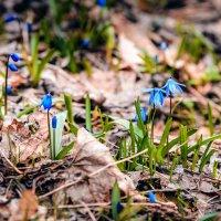 Весна :: Alexey Bartenyev