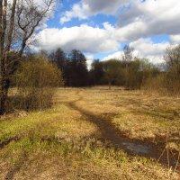 IMG_6321 - Апрель похожий на апрель :: Андрей Лукьянов